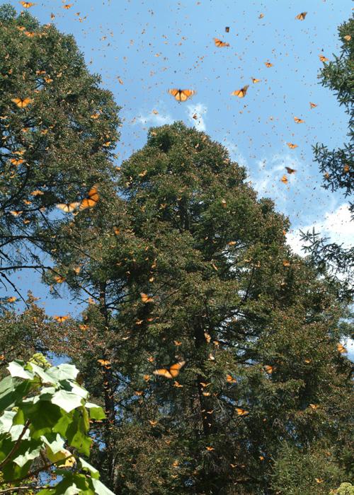 El Rosario Butterfly Sanctuary